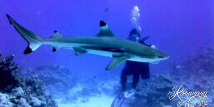Huahine-Sheilas-first-dive-with-sharks