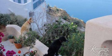Pooch-perch-our-neighbors-enjoying-the-view